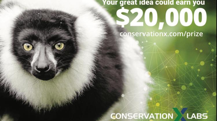 CXTP lemur